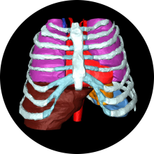 patient-specific segmentation of internal organs